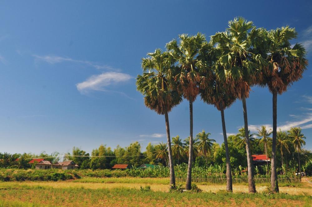 Kambodscha Entdecken - 9 Tage / 8 Nächte Reise 8